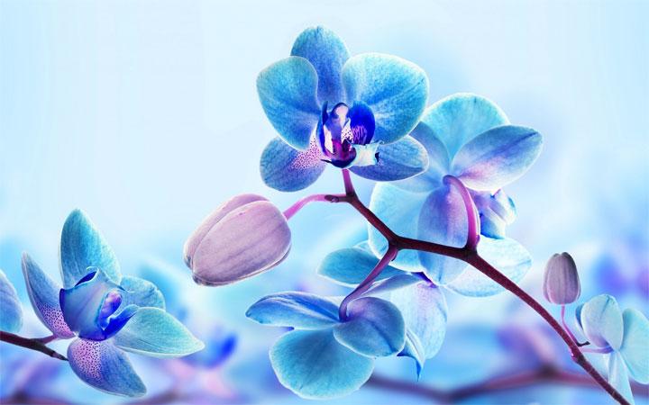 Картинки рисованные орхидея