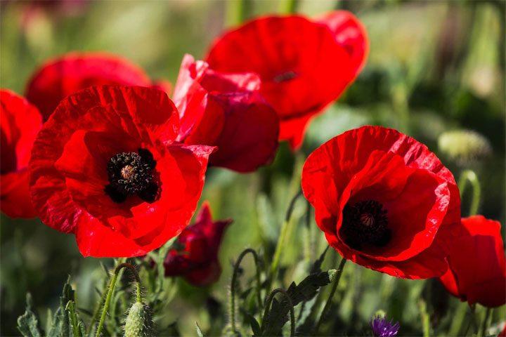 Самые красивые цветы в мире - ТОП-10
