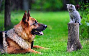 Самые умные породы собак – ТОП-10
