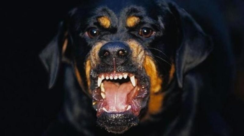 Самые опасные и агрессивные породы собак