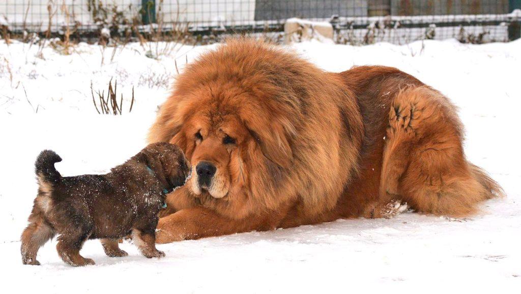 Породы лысых собак