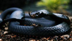 Самые ядовитые змеи в мире – ТОП-10