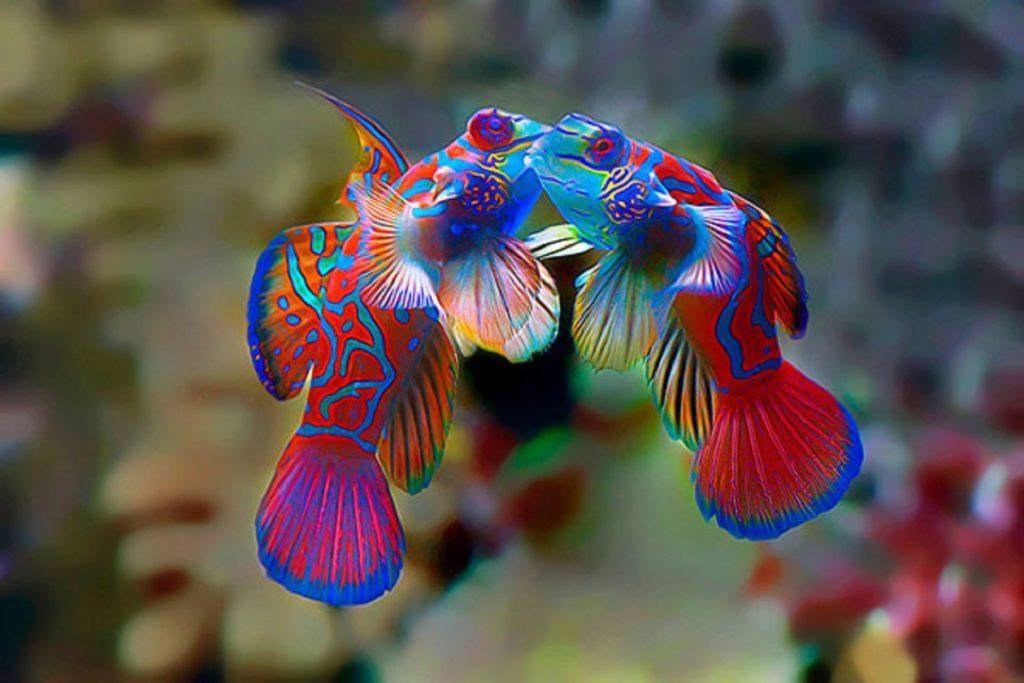 самая красивая рыба в мире фото встречаете достоверные