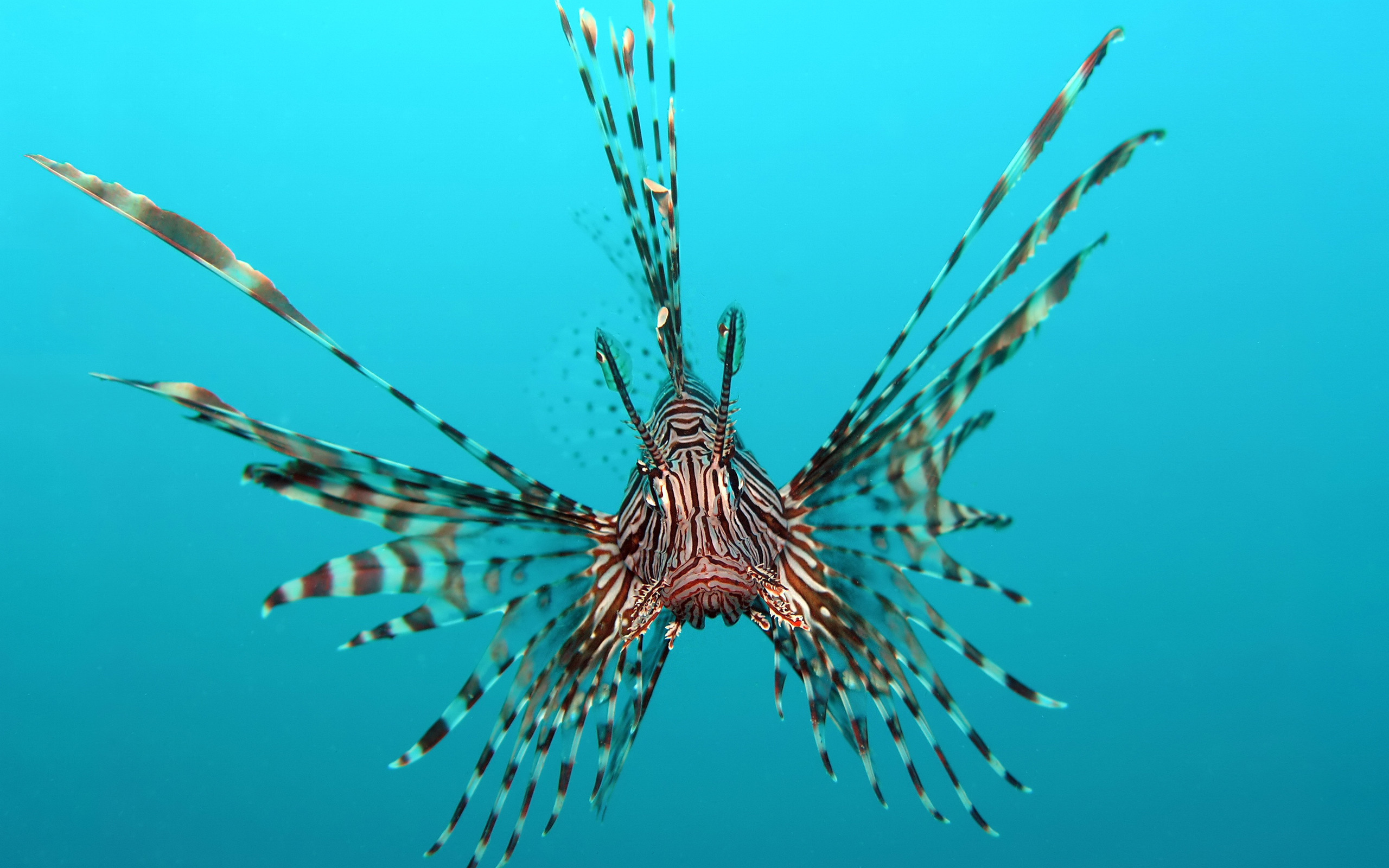 Самые красивые рыбы в мире – ТОП-20 (+ 40 фото)