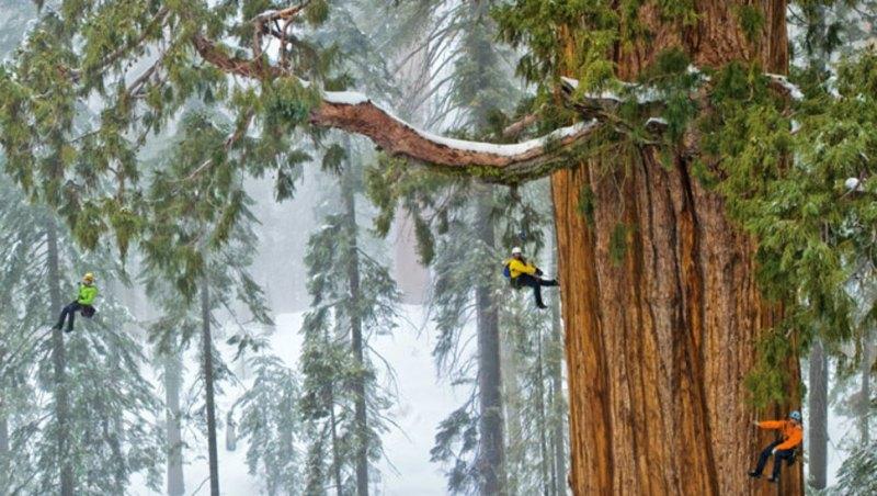 Самые высокие деревья в мире — ТОП-10