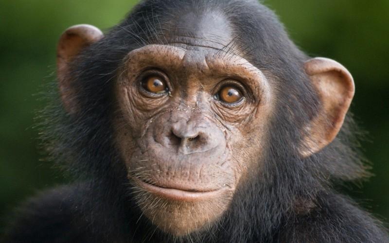 Самые умные животные в мире – ТОП-10