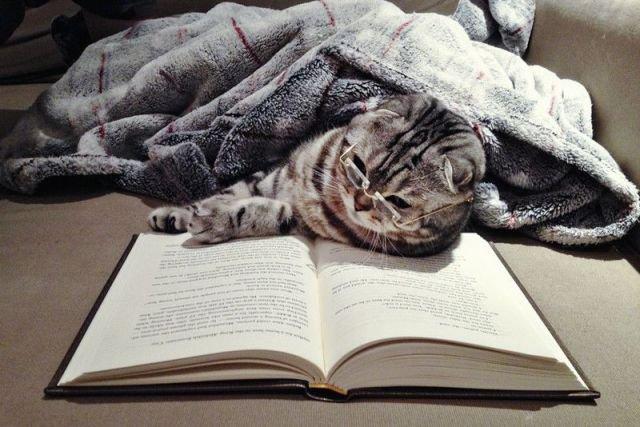 Самые читаемые книги 2017 года, список лучших произведений
