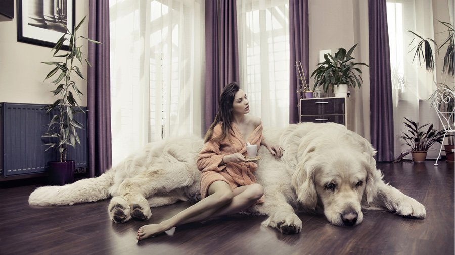 Самые большие собаки в мире – ТОП-11