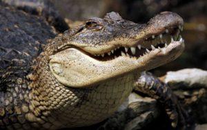 Самые древние животные среди живущих на Земле – ТОП-10