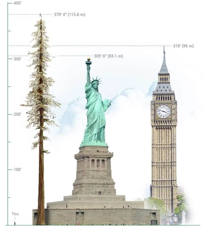 Сравнение высоты дерева и достопримечательностей