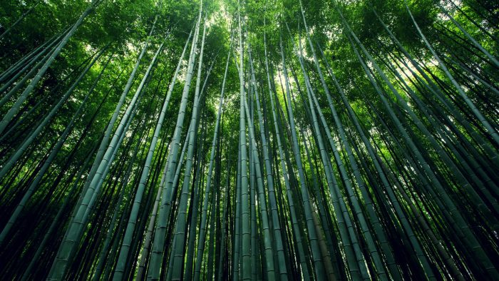 Лощина черного бамбука Хэйчжу, Китай