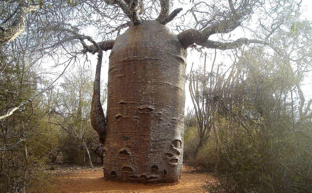 Топ-10 старинных деревьев со своей историей, которые переживут нас всех