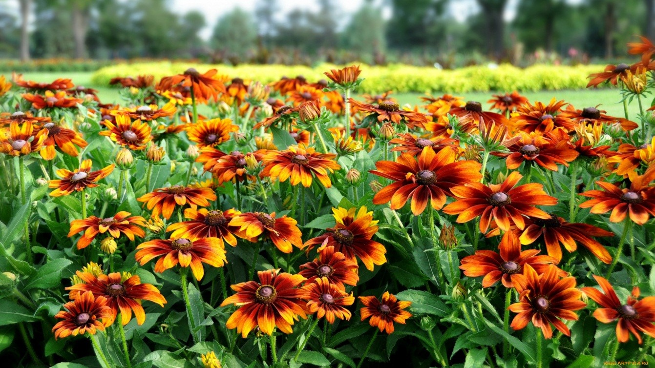 10 цветов, которые восхищают своей красотой