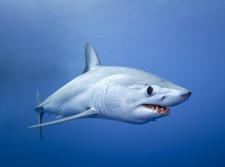 Топ 10 больших акул в мире