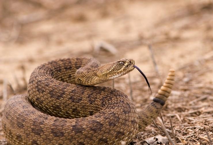 Топ 10 ядовитых змей в мире