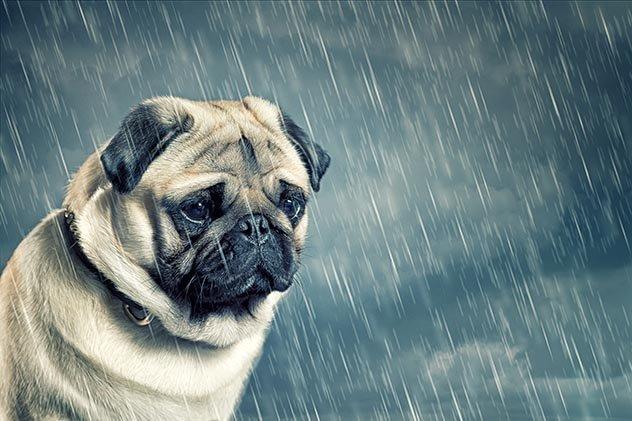 Топ 10 интересных фактов о разуме собак