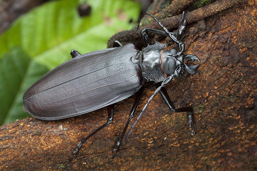Насекомые-гиганты. 10 насекомых, чьи размеры потрясают воображение