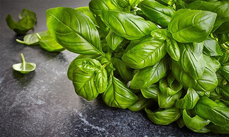 Найдутся на любой кухне: топ-10 природных антибиотиков