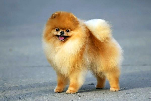 Топ 10 красивых породы собак