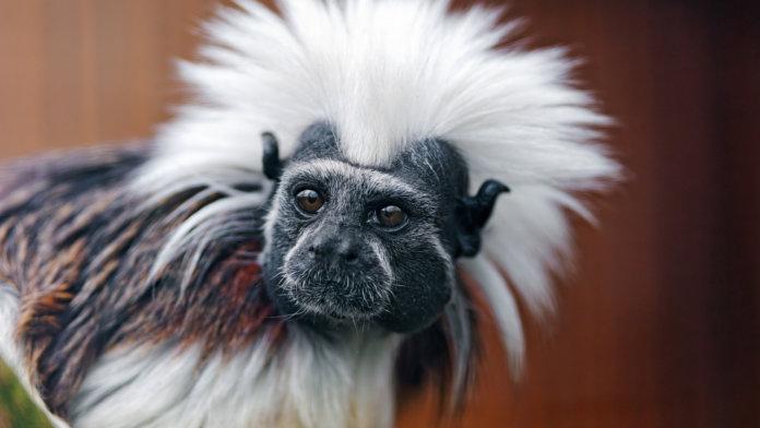 10 экзотических животных для домашнего содержания