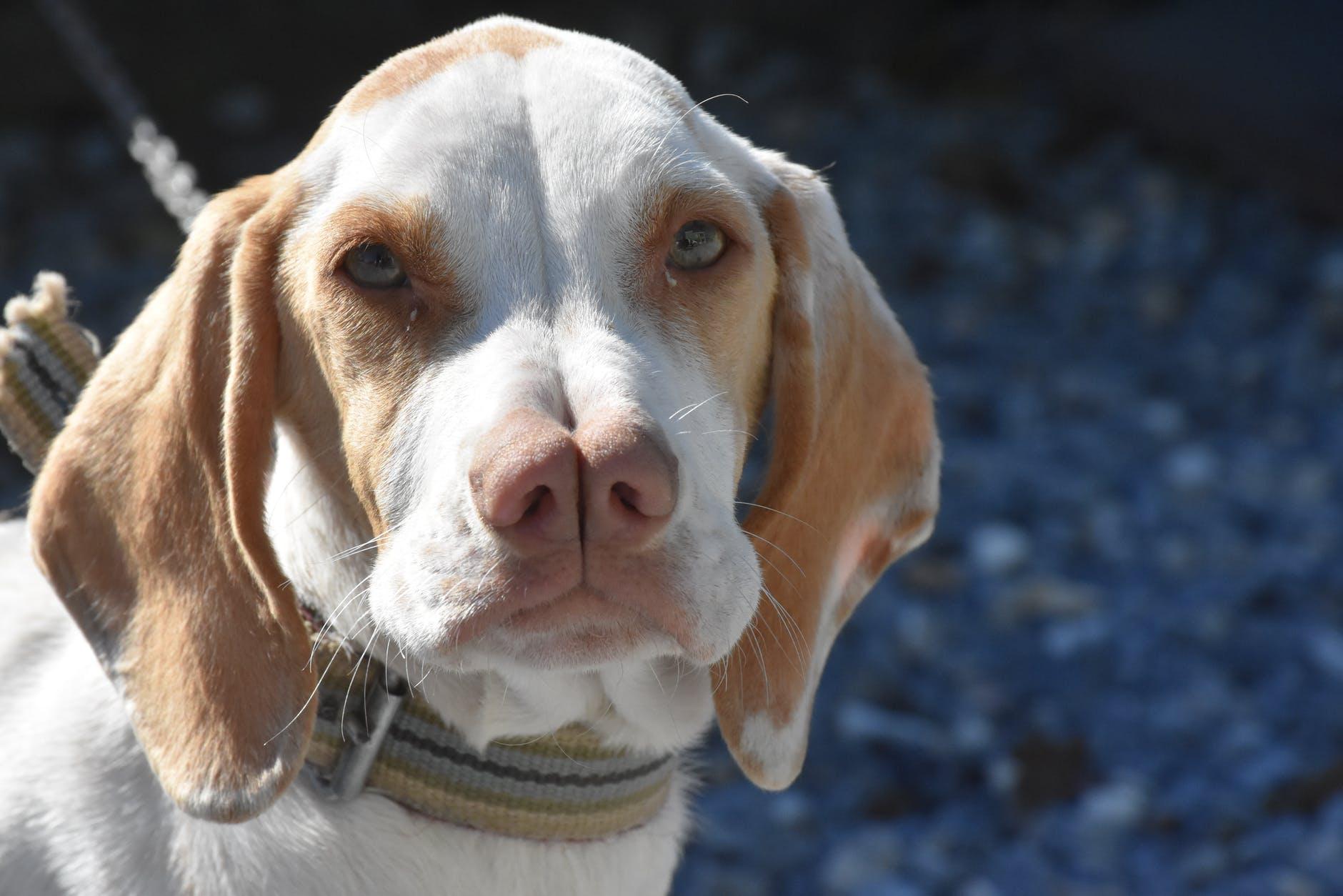Топ-10 редких пород собак