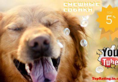ТОП-7: смешные собаки на YouTube