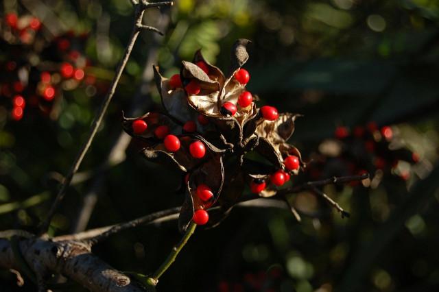 Красивые, но опасные: 8 растений, которым не место в саду