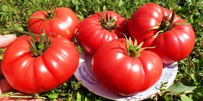 Топ 10 сладких сортов томатов
