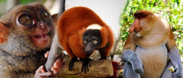 ТОП-10 удивительных животных
