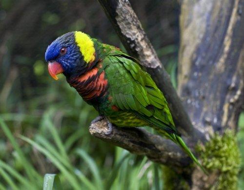 Топ-10 красивых птиц в мире