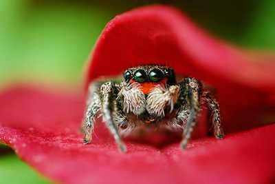 Топ-10 удивительных фактов о животных