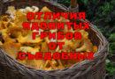 10 признаков ядовитого гриба